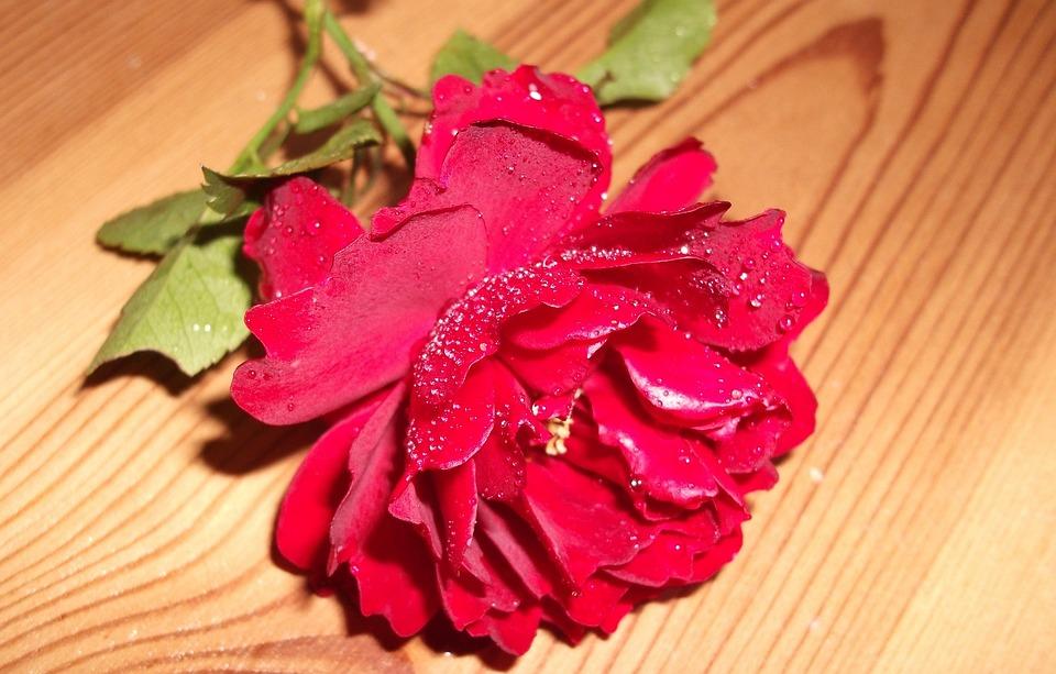 free photo rose, love, romantic, red rose  free image on pixabay, Beautiful flower