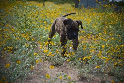 Dog, Pet, Owner, Veterinary, Happy
