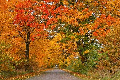 Autumn, Avenue, Trees, Away, Road
