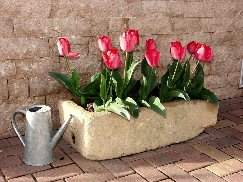 Foto gratis tulipani vaso di fiori fiore immagine gratis su pixabay 1002203 - Fiori da giardino autunnali ...