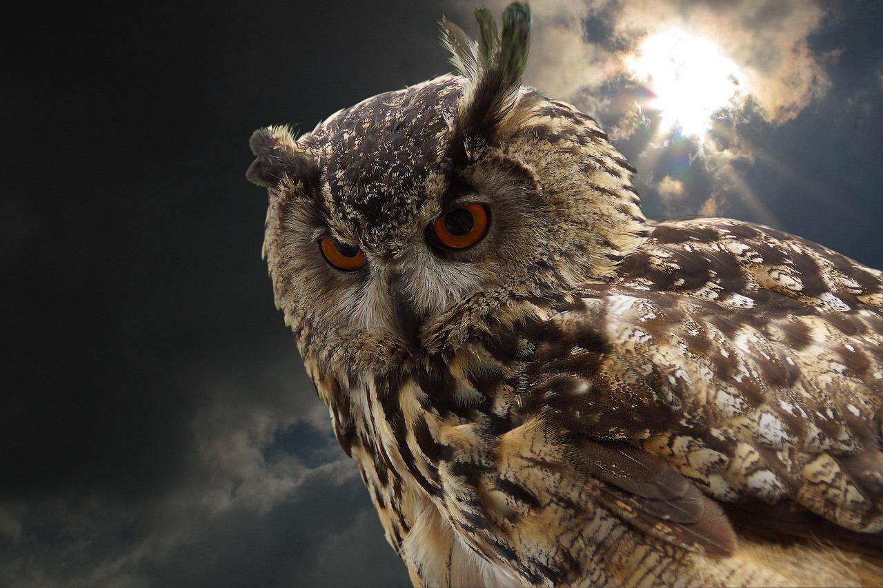 Сова фото птицы ночью