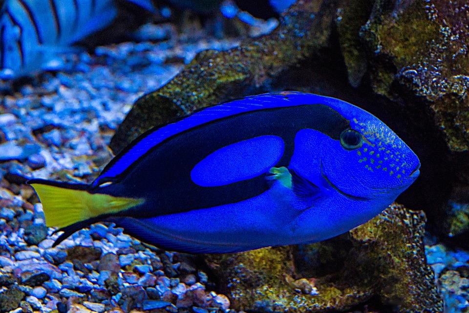 Free photo aquarium fish sea aquarium free image on for Spring water for fish tank