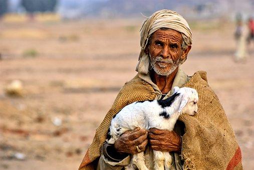 Egypt, Man, Bedouin, Desert, Sheep, Hot