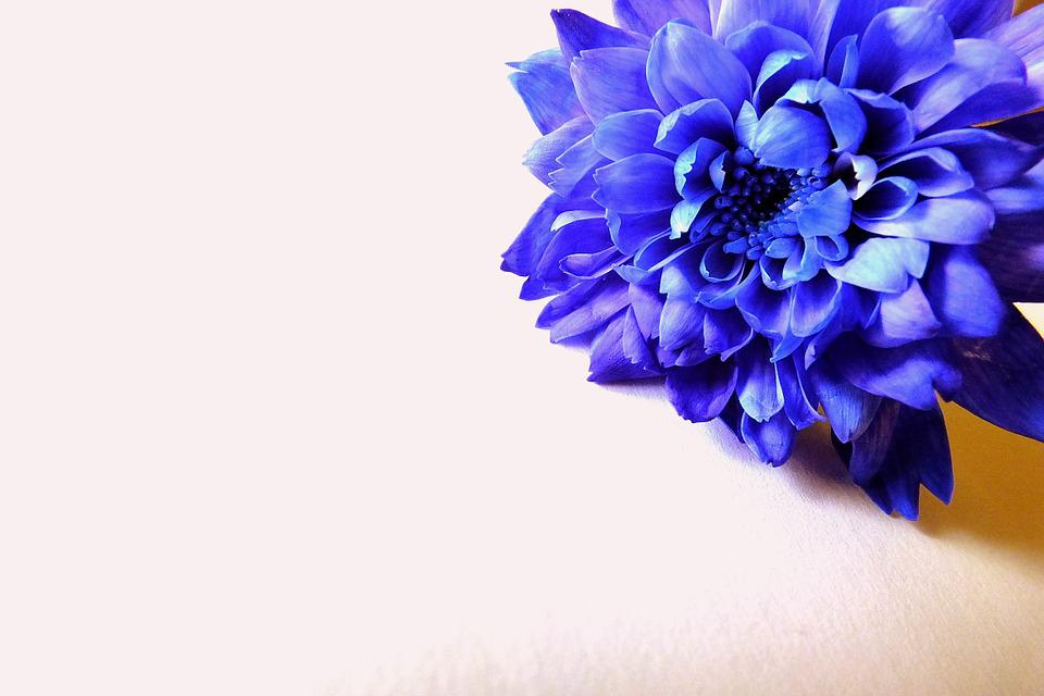 Flowers Nature Flower Free Photo On Pixabay