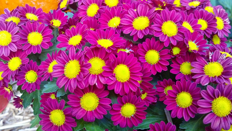 Flowers Fall Pink Free Photo On Pixabay