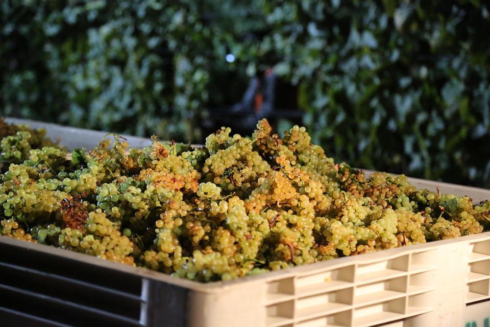 Franciacorta vitigno chardonnay