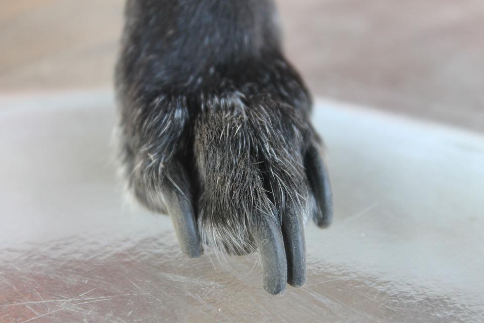 Beste nagelschaar voor honden – Dit zijn de 4 beste nagelscharen