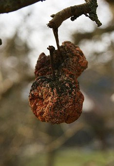 Apple, Garden, Rot, Autumn, Tree, Fruits