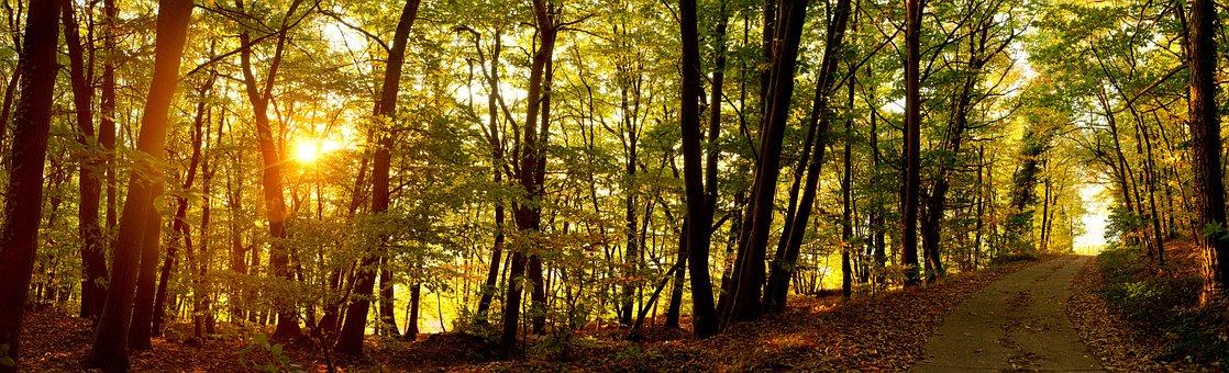 2.000+ kostenlose Waldweg und Wald-Bilder - Pixabay