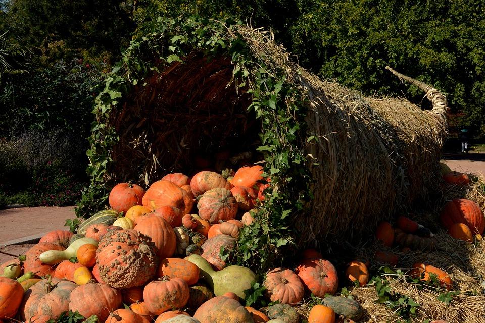 Pumpkins Vegetables Orange 183 Free Photo On Pixabay