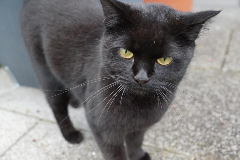 Čierne krásy mačička