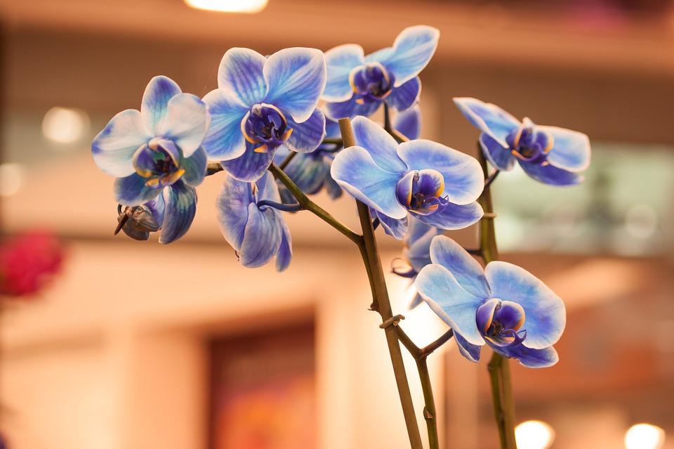 Orchidea, Fiori, Fiore, Pianta, Bellissimi Fiori