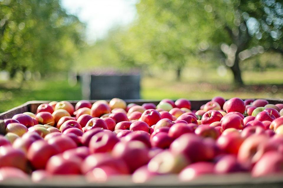 Jabłka, Upadek, Jesień, Owoców, Natura, Żywności