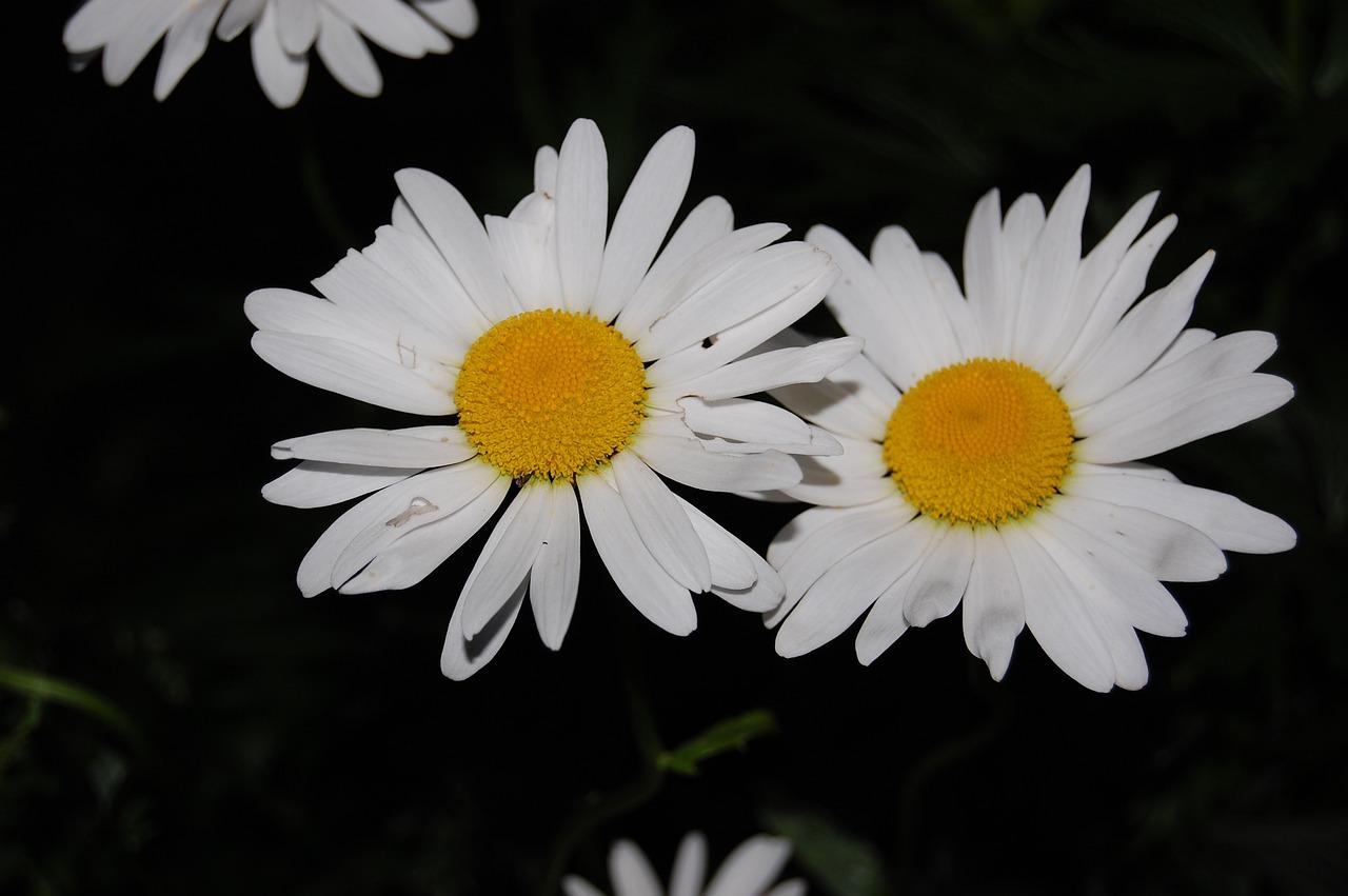 Рассада многолетних цветов, купить многолетники оптом