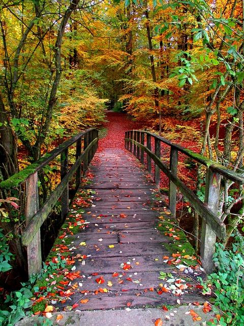 Kostenloses Foto: Weg, Wald, Herbst, Laubfärbung ...