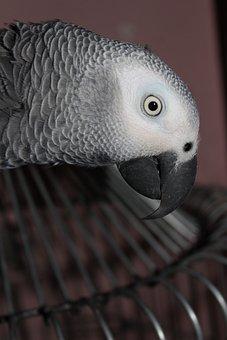 Μεγάλο πουλί σταυρωτά