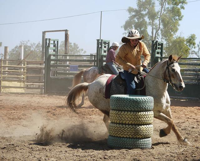 Free Photo Barrel Racing Cowboy Rodeo Free Image On Pixabay 1010087