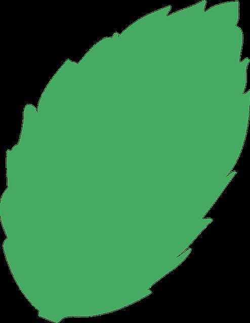 Hoja rbol residuos gr ficos vectoriales gratis en pixabay for Arboles de hoja perenne en galicia
