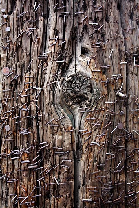 telephone pole staples grunge  u00b7 free photo on pixabay