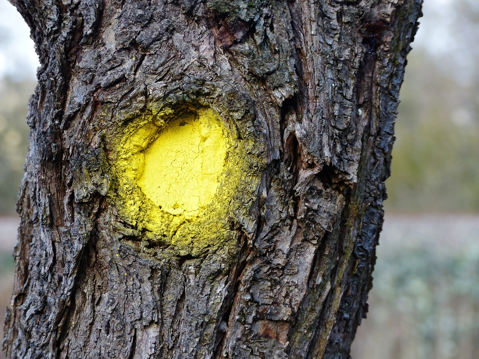 Log Bark Yellow Dot Free Photo On Pixabay