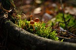 autumn, forest, mushroom