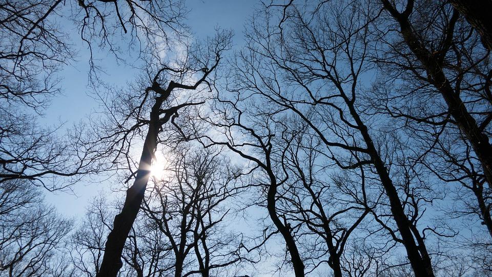 Tree, Aesthetic, Log, Branch, Winter Sun, Winter, Kahl