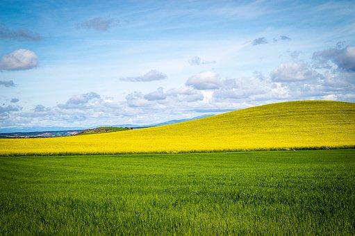 Sky, Field, Blue Sky, Clouds, Landscape