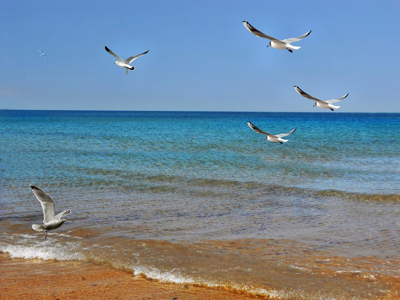 Картинки смешные, картинки с чайками и морями и реками