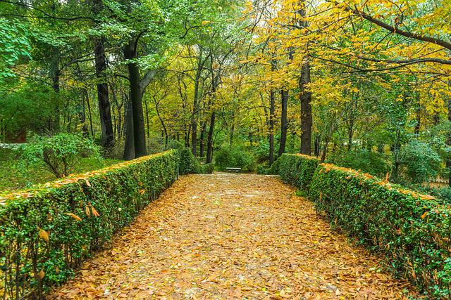 Free photo  Autumn, Green, Garden, Nature   Free Image on Pixabay   1019284