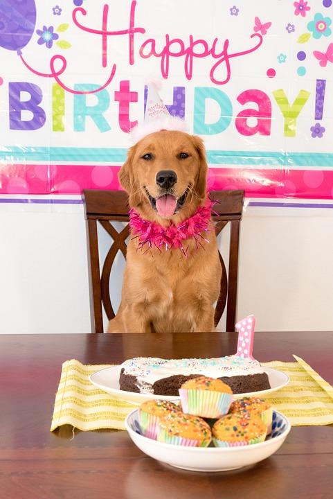 Geburtstag Hund Lachelnd Kostenloses Foto Auf Pixabay