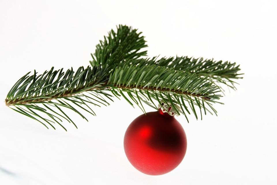 Weihnachtsbaum Ast.Tanne Nordmanntanne Christbaum Kostenloses Foto Auf Pixabay