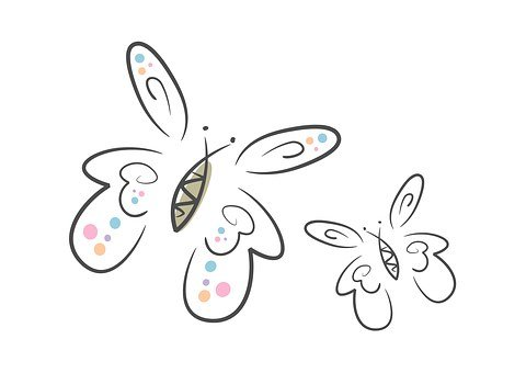 Butterflies, Two, Insect, Fly, Wing