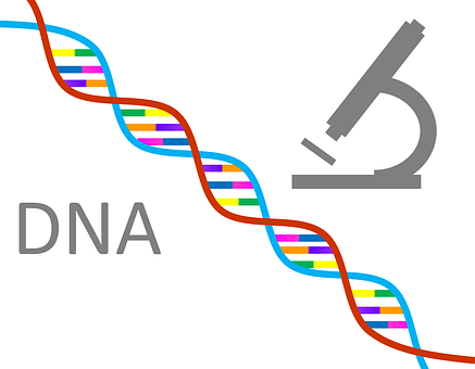 Dna Genetics Science Research Gene Chromos
