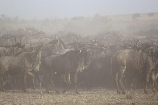 Great Migration, Africa, Safari