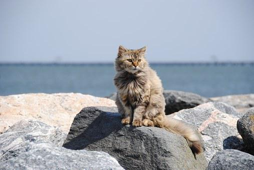 Cat Feral Beach Rocks Outdoor Cat Cat Cat