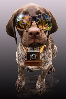 Partner, Press, News, Dog, Sunglasses