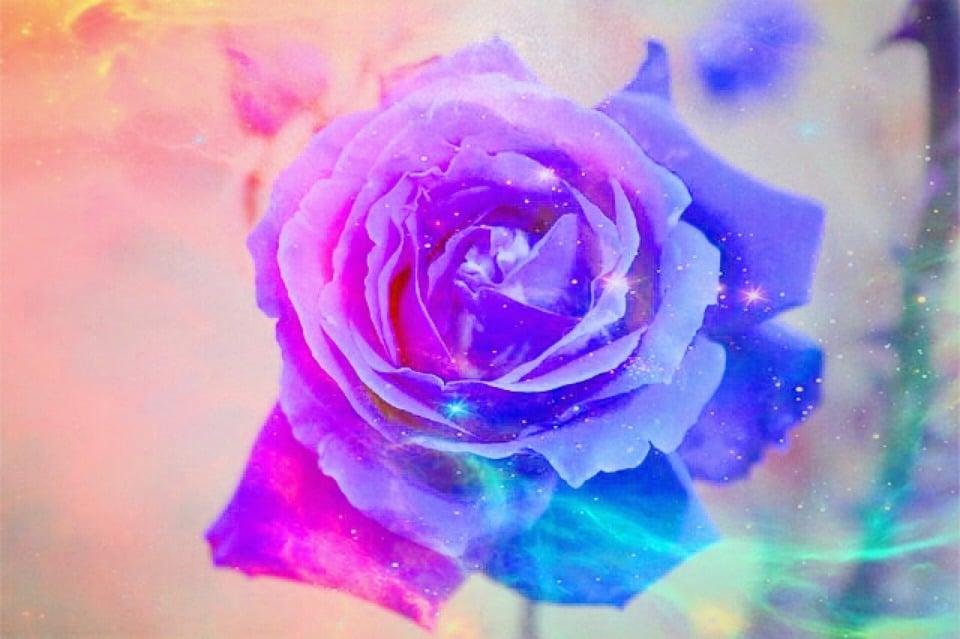 Rosa Colore Fiore Immagini Gratis Su Pixabay