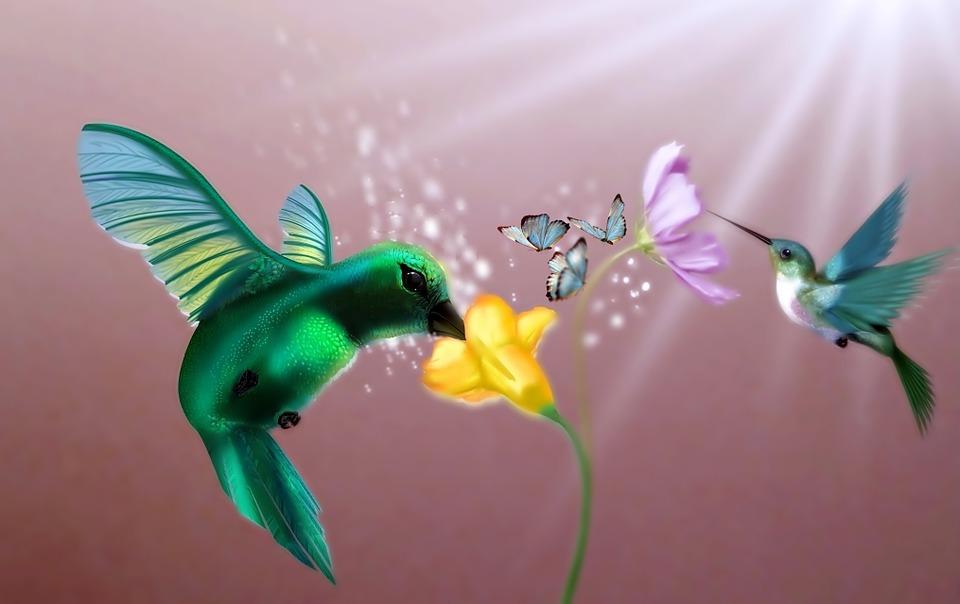 Foto de beija flor na flor 48