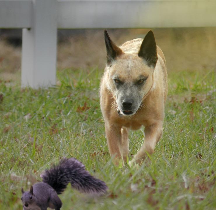 Dog, Squirrel, Fence, Light, Grass