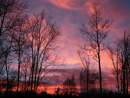 Sunrise, Pink, Trees, Sky, Nature