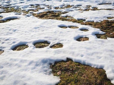 Meadow, Snow, Snow Melt, Winter