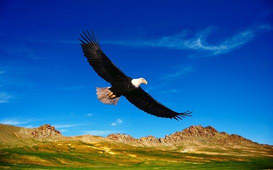 Flying Eagle Images Pixabay Download Free Pictures