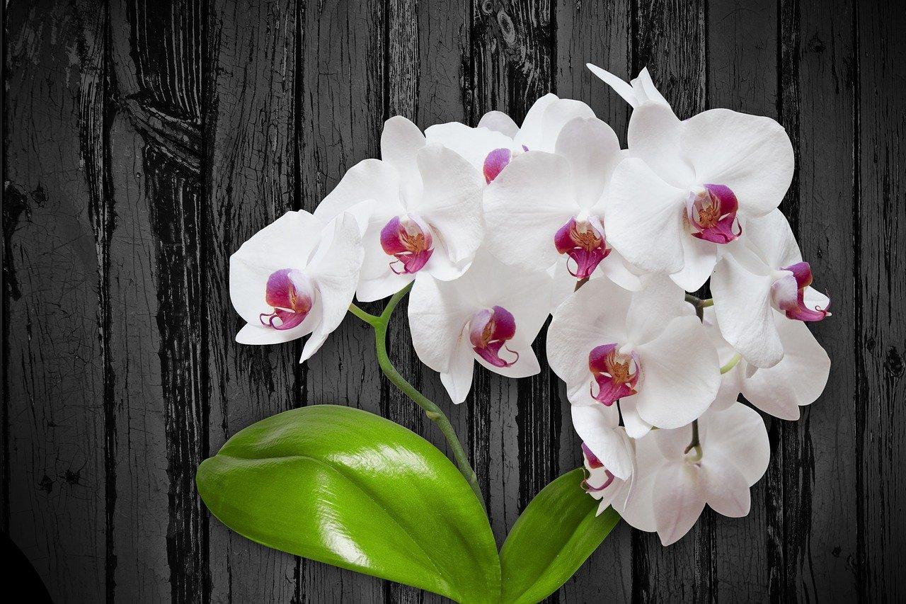 Картинки широкоформатные орхидеи