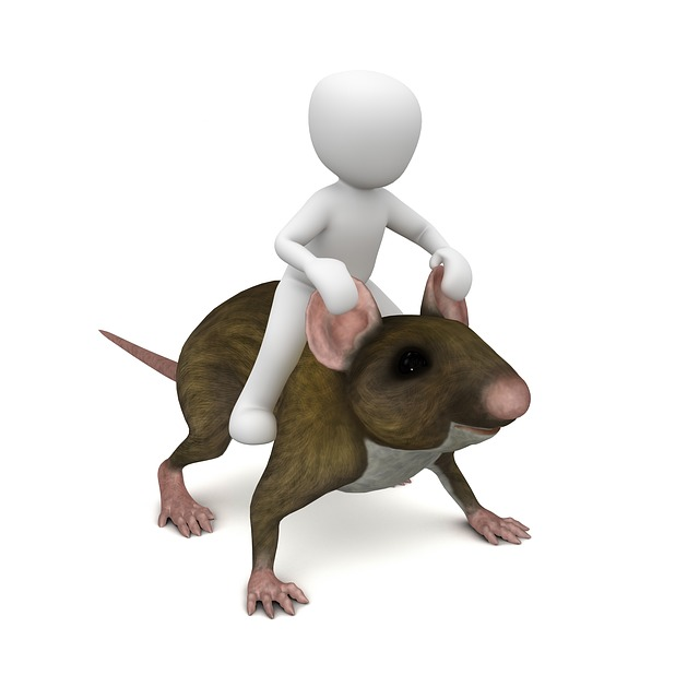 Mouse Rat Ride 183 Free Image On Pixabay