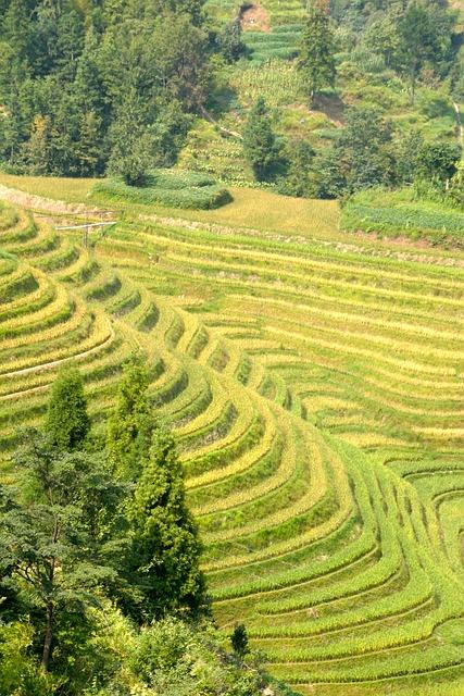 Gratis Fotografie Ris Plantasje Ris Plantasjer Gratis