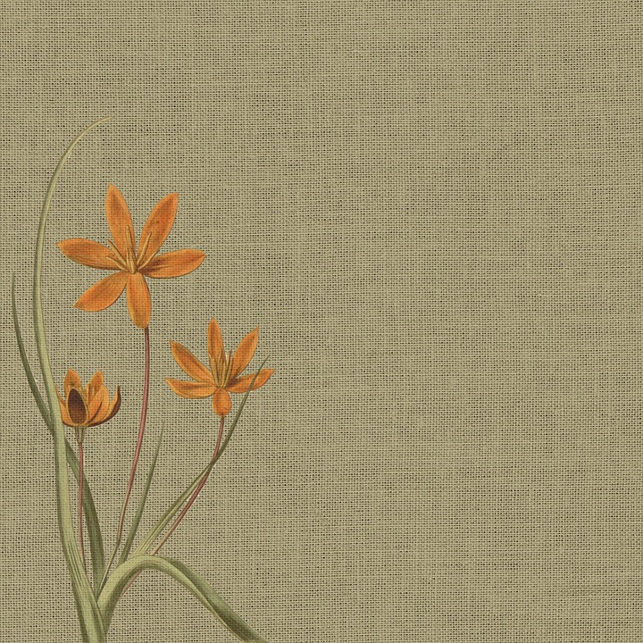 free illustration background burlap orange flower