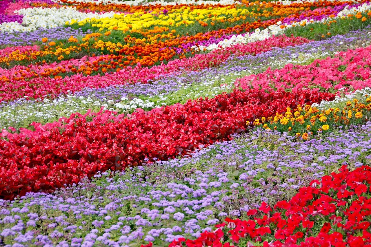 Картинки миллион цветов, февраля