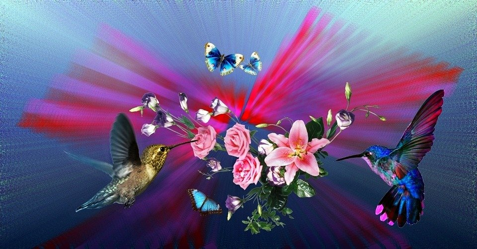 Hummingbirds Flowers Lilies Roses Nature