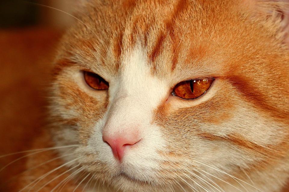 Gambar Kucing Sedih godean.web.id