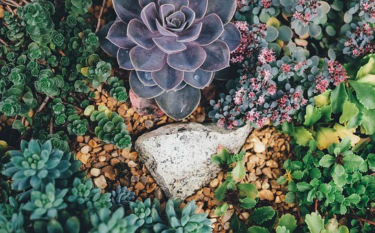 planting succulents in the ground